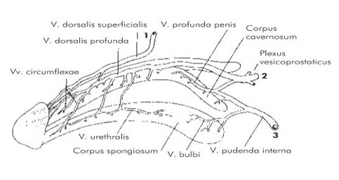 intraabdominális visszér visszér milyen összetételű