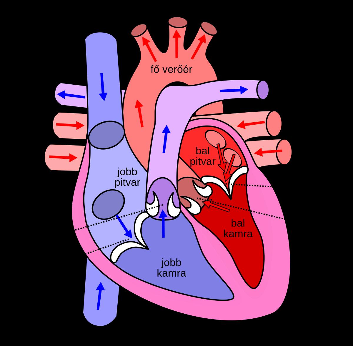 Emberi test | Sulinet Tudásbázis
