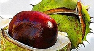 malko visszér Hel készítmények visszér kezelésére