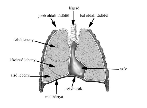 dióolaj visszér kezelése