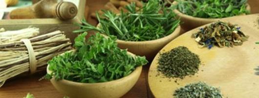 Visszér milyen gyógynövényeket inni