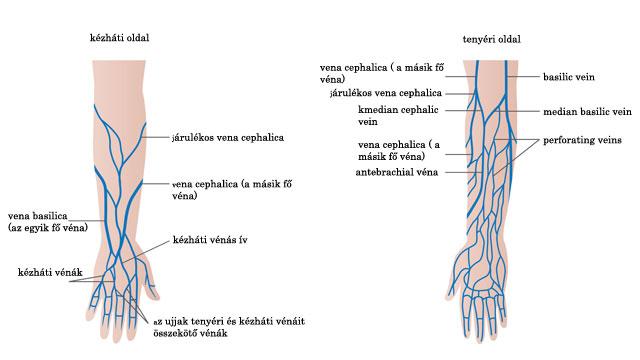 visszérbetegségek és thrombophlebitis)