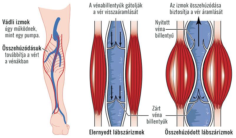 a lábak és a visszér bőrbetegségei